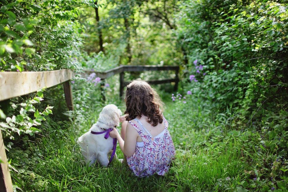 Choosing a Family Pet – What you need to know…